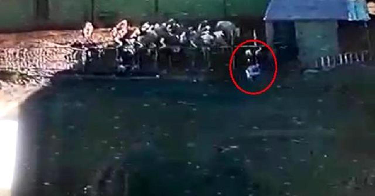 850 kiloluk boğanın saldırısına uğrayan adam hayatını kaybetti