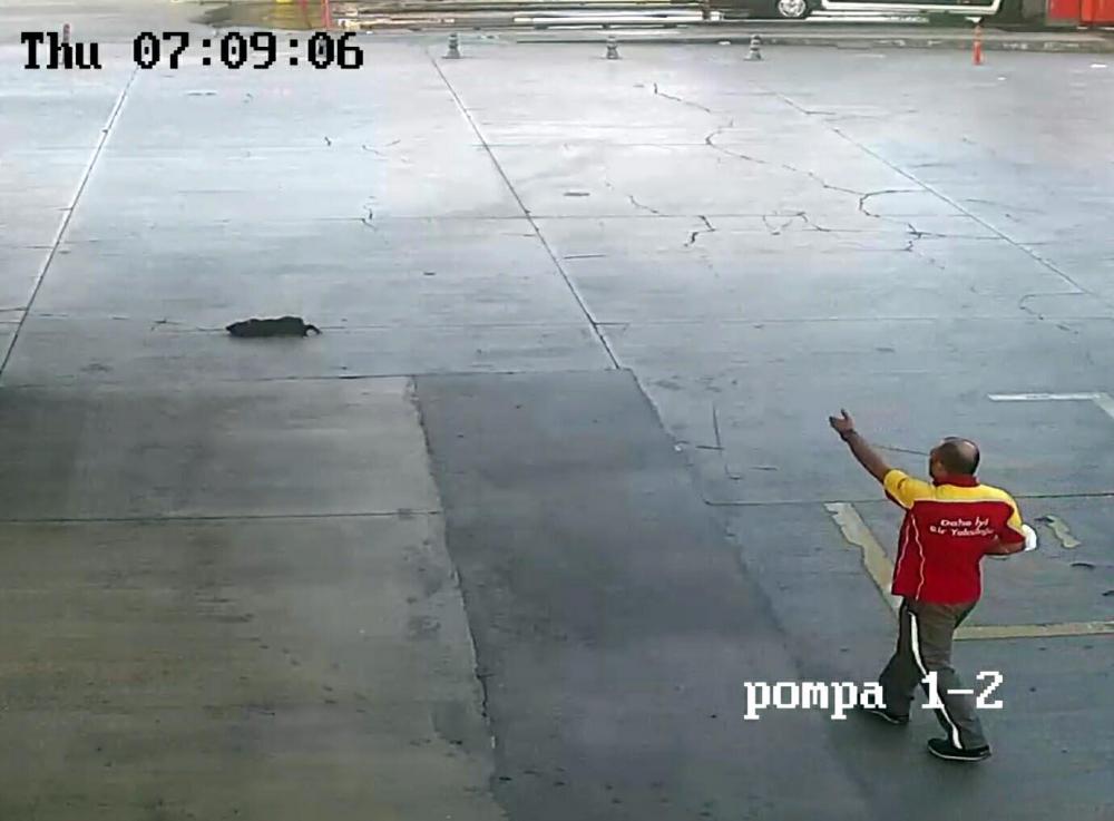 Acı içinde kıvranıp öldü! Minibüs şoförü yavru köpeği ezdi